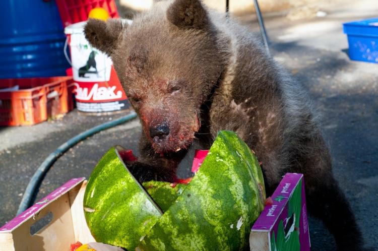 Обитатели карантинного центра животных страдают от жары, установившейся в Ленобласти