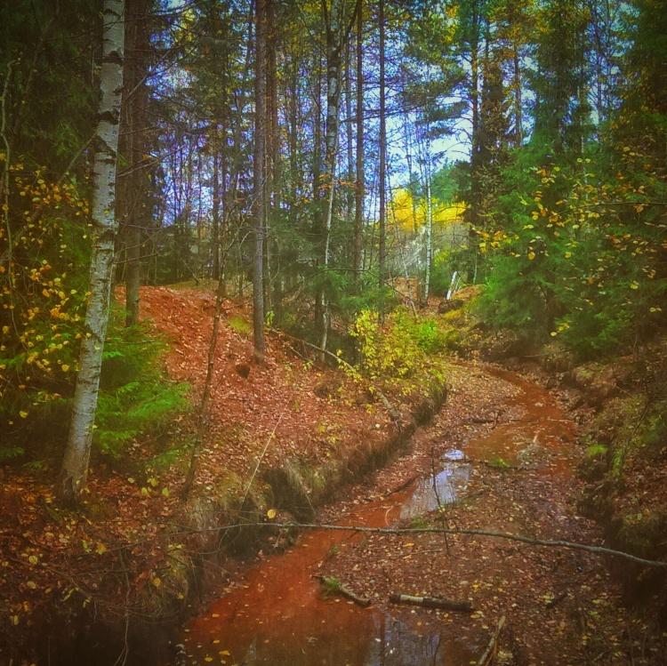 Лес, который может превратится в многоэтажки