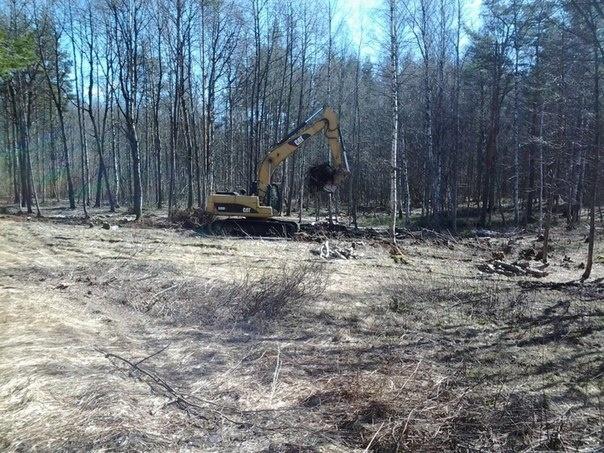 Активисты: Вырубка леса в Токсово продолжается