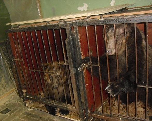 """Ленобласть присоединяется к международной акции """"За цирк без жестокости - без животных"""""""