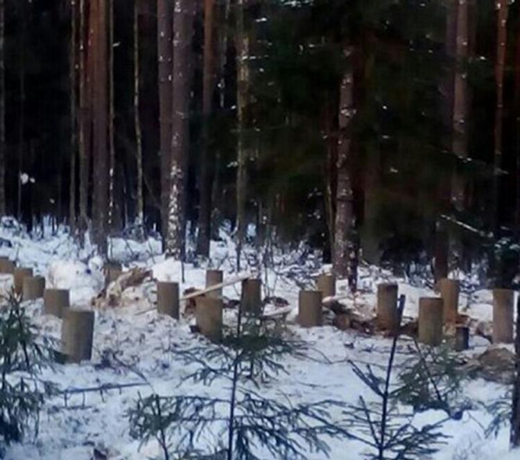 В Токсово обсудят застройку Ново-Кавголовского лесопарка