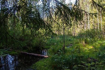 ЗакС хочет защитить Ржевский лесопарк от застройки