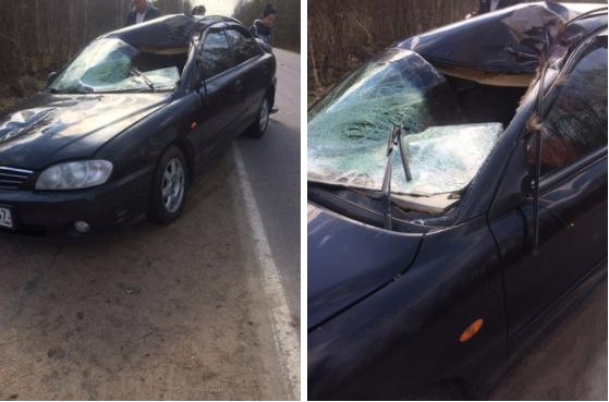 Лось погиб под колёсами машины у посёлка Дунай