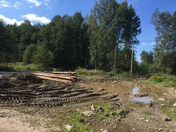 Хищническая рубка леса в Новом Девяткино