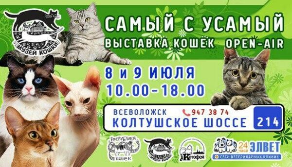Кошачий open-air состоится в Музее кошки