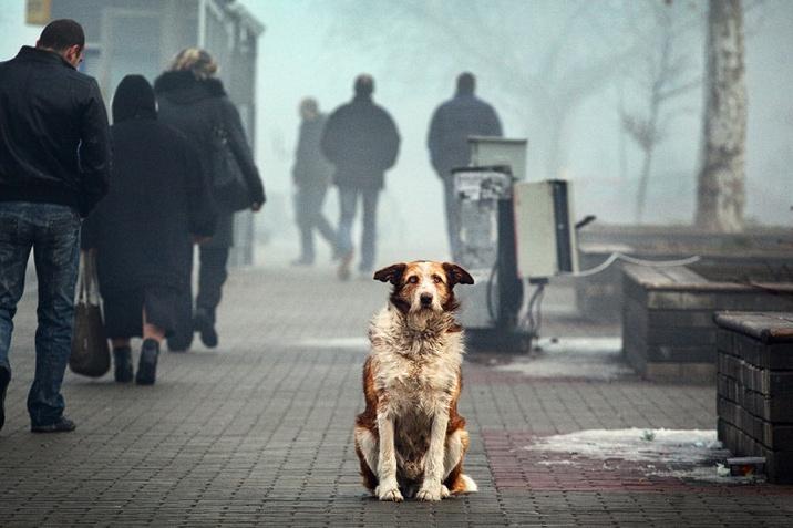 Бездомные псы Ленобласти: настоящее и будущее