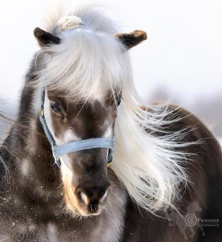 Фото: mini-pony.ru
