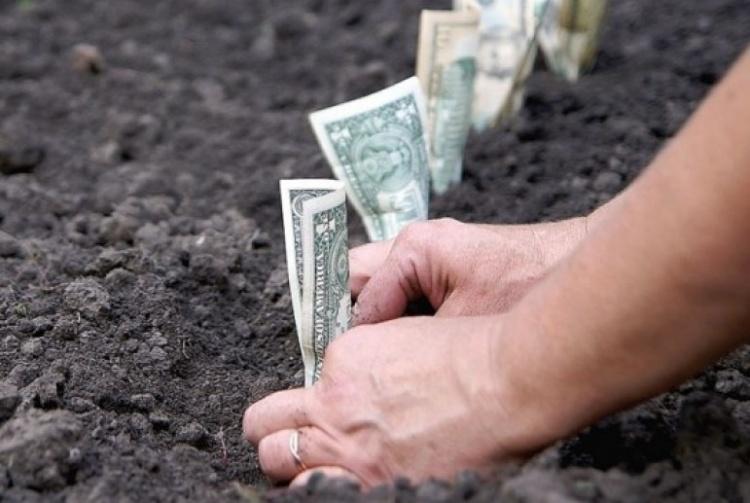 С бизнесменов вымогают деньги за право арендовать землю в Кузьмоловском