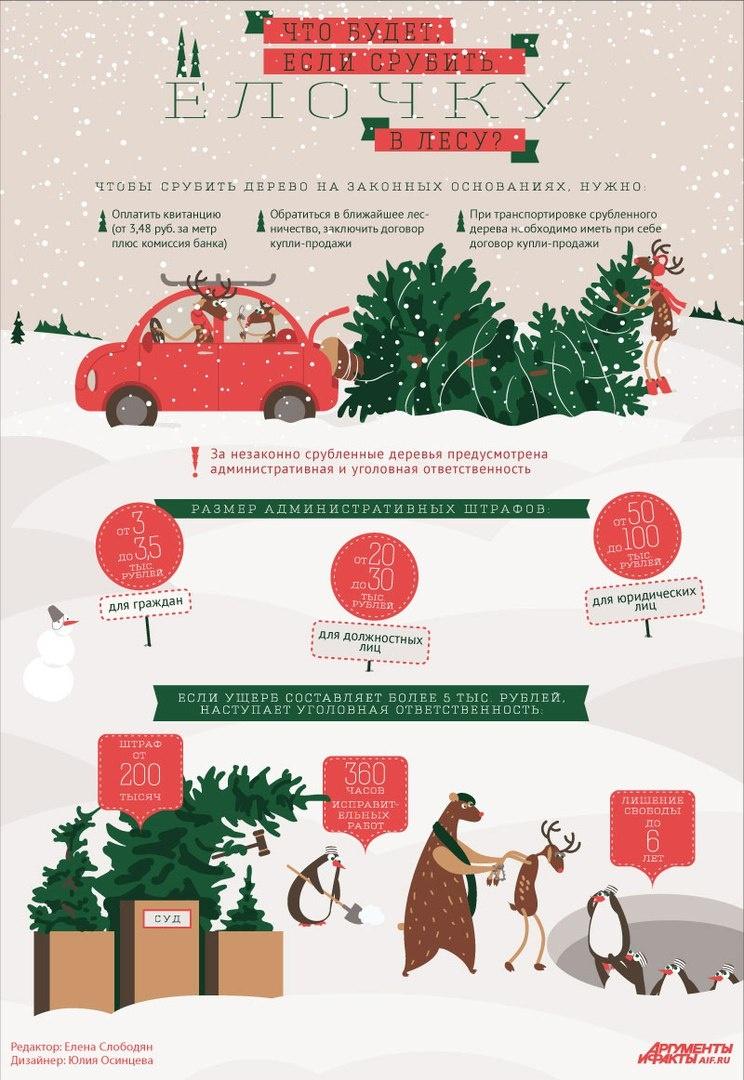 Как и какую выбирать на Новый год ёлку: инструкция