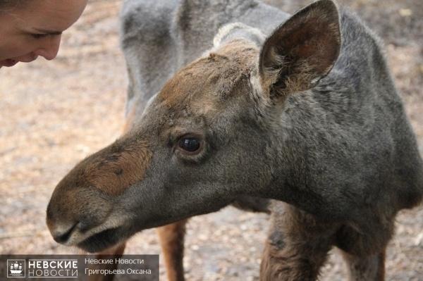 Центр помощи диким животным «Велес»: желтые ворота, груда яблок и много-много зверей