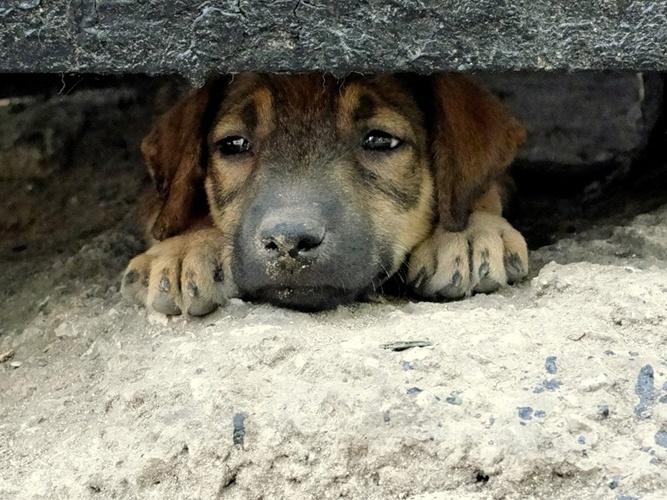 СК проверяет причастность депутата из Ленобласти к расстрелу бездомных собак