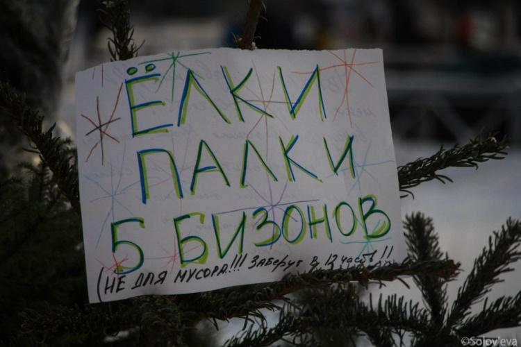 22 января жители Всеволожска смогут сдать новогодние ёлки на утилизацию