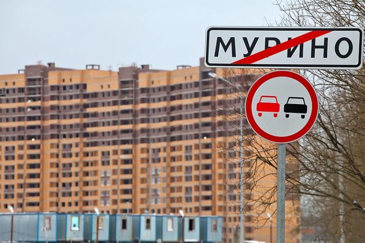 Эффект Мурино: почему вместо магистрали получился сельский скотопрогон