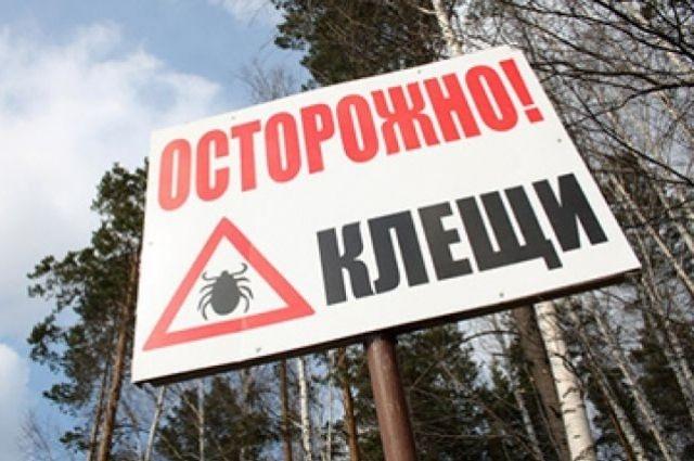 Клещи покусали 5,3 тыс. жителей Ленобласти