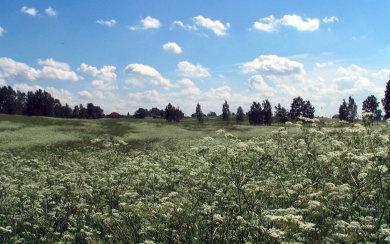 Строительство на территории объекта Всемирного наследия «Павлово-Колтуши» запрещено судом