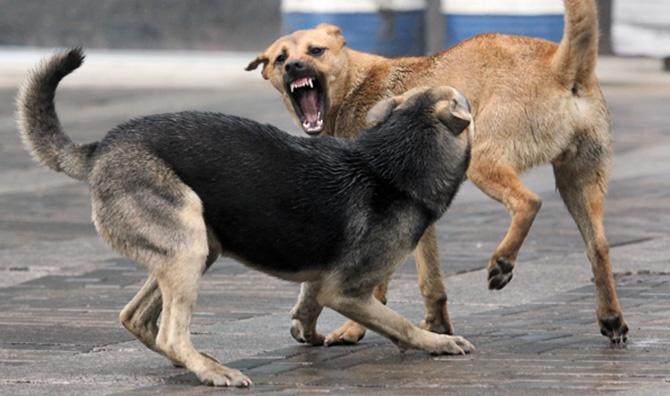 Бездомные животные в Ленобласти: «кусачая» проблема сдвигается с мертвой точки