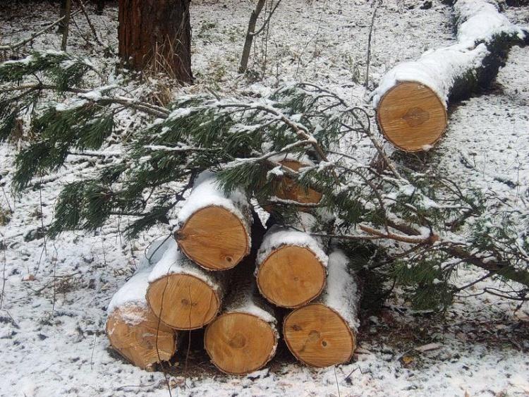 Незаконную рубку всеволожского леса оценили в пять миллионов рублей