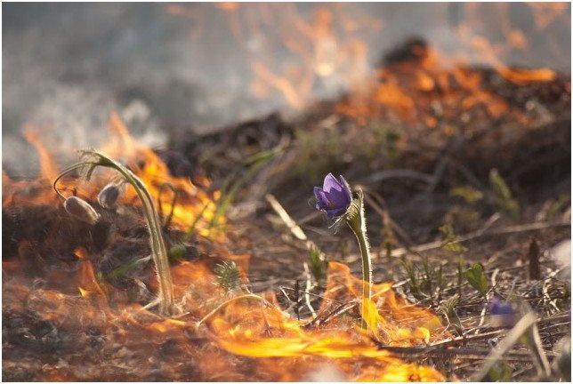 Штрафы за выжигание сухой растительности