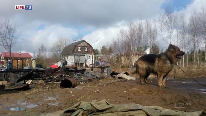 Пес Граф, потерявший хозяев на пожаре, нашел новый дом