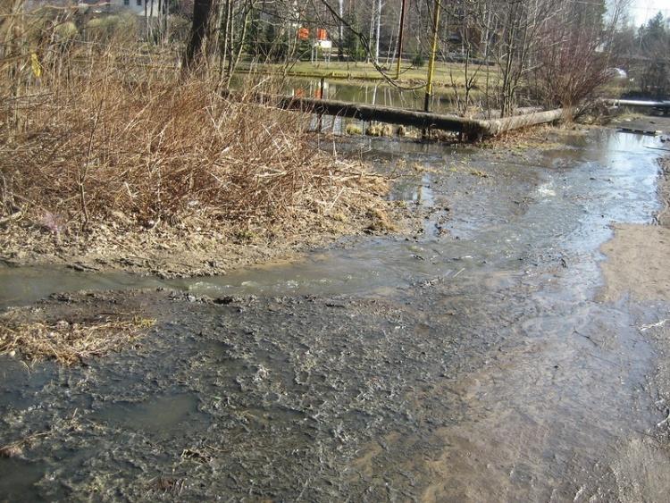 В Бернгардовке канализационные стоки более полумесяца отравляют озера и подворья