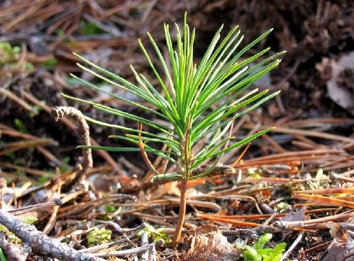 В Ленинградской области пройдет ежегодная акция «Лес. Перезагрузка»