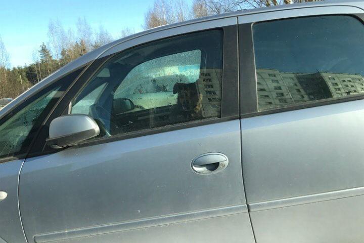 В Новом Девяткино собака всю зиму живет в припаркованной машине