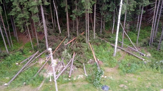 В Сертолово защитников леса едва не распилили