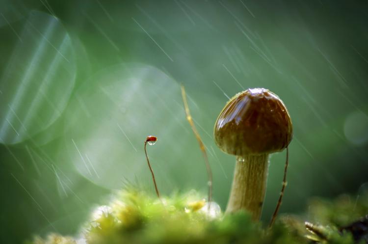Что делать с грибами и как избежать отравления. Фотография: http://anatolih.35photo.ru