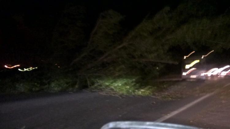Сильный ветер стал причиной ДТП в Новом Девяткино