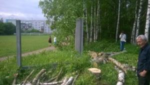 «Зеленые» активисты остановили вырубку берез в селе Павлово