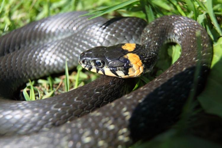 Что делать, если вас укусила змея