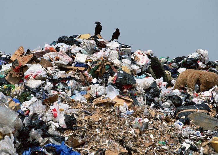 Всеволожский район тонет в мусоре