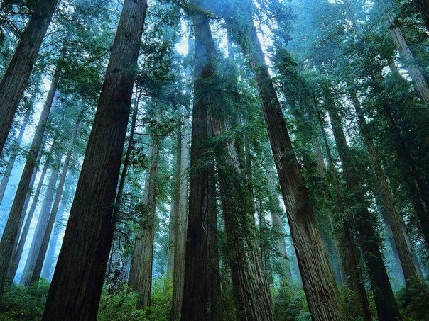 "В лесах Ленобласти нашли тела грибника и ""проповедника"""