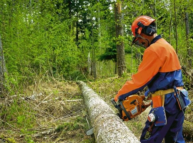 Экозащитники: Во Всеволожском районе ведется распил леса
