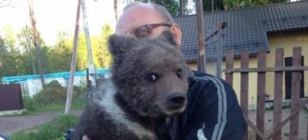 Маша - медведь