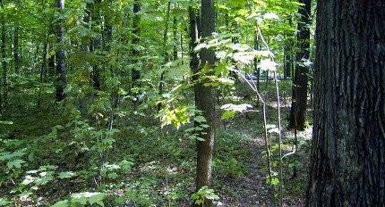 Жители Ленинградской области защищают леса от неконтролируемых застроек