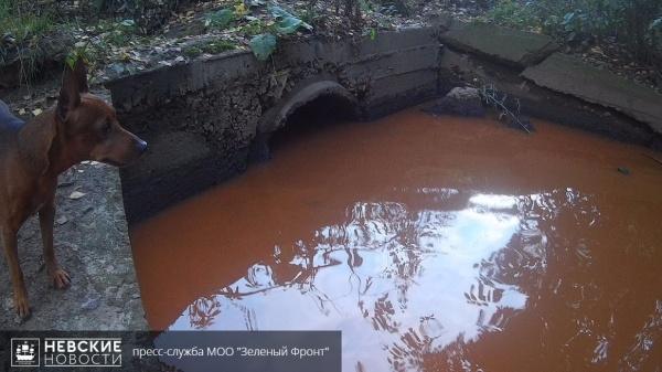 Активисты организации «Зеленый фронт» бьют тревогу: речка Оккервиль местами стала черного цвета