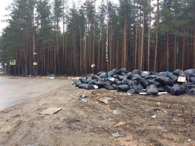Власти Всеволожского района хотят выработать концепцию борьбы со свалками