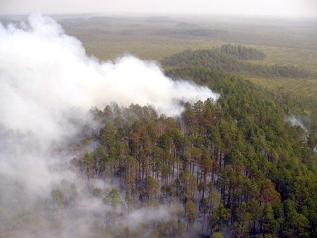 МЧС сымитирует крупный лесной пожар во Всеволожском район