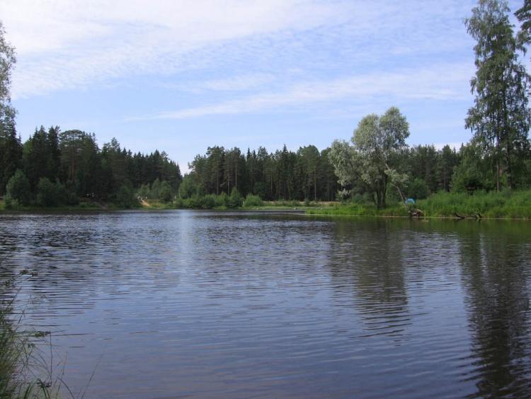 озеро белое курголовский полуостров рыбалка