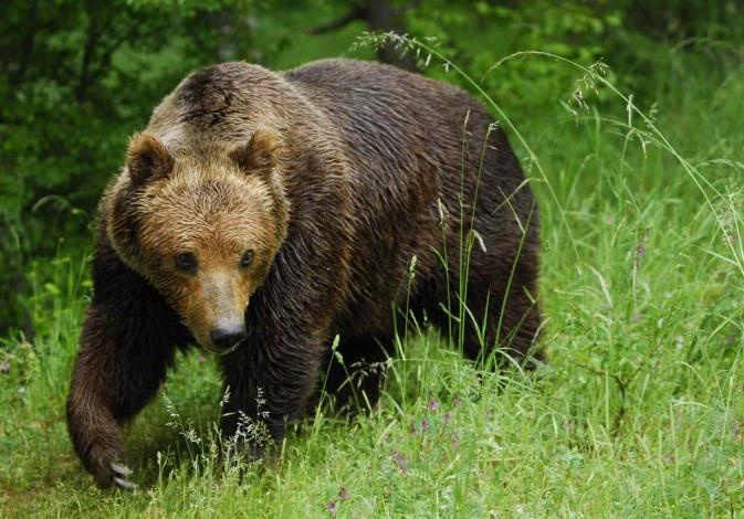 Дикие звери в Ленинградской области: как выжить при встрече