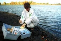 Росприроднадзор: Результаты проб воды из реки Охты еще не готовы