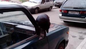 Жители Новодевяткино ищут хозяина ручного ворона