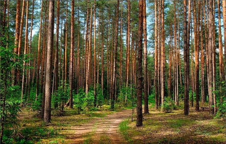 Защитные леса первой категории включили в состав МО «Город Всеволожск»