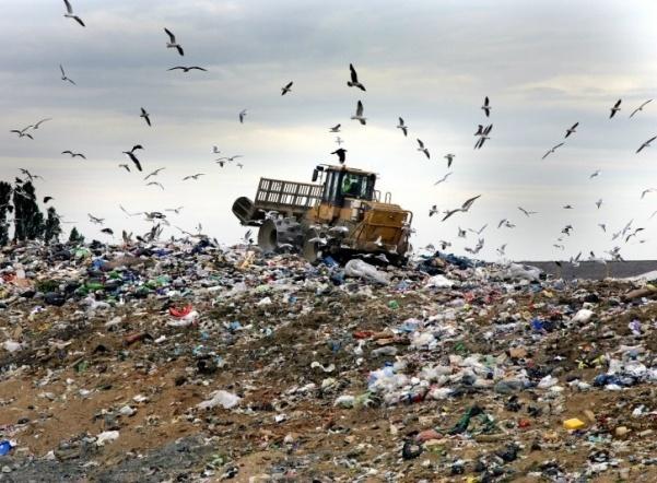 В Колтушах нашли свалку опасного мусора