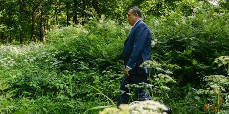 В Румболово появится особая природная зона