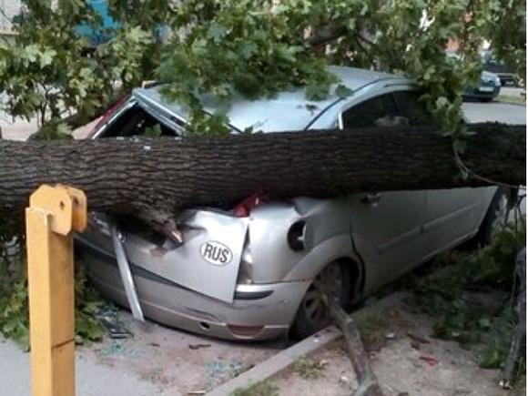 Петербург зализывает раны после шторма
