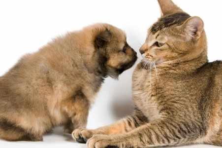 Эрмитажный кот Фёдор вернулся со щенком