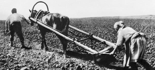Всеволожск признался в земельной анархии
