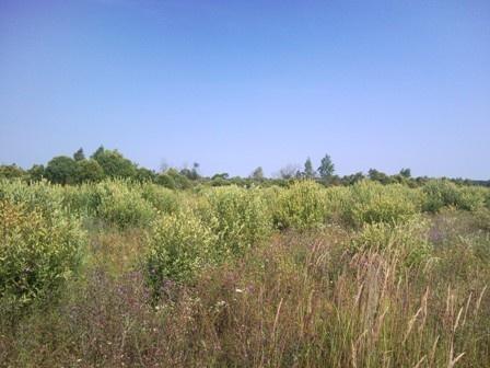 Во Всеволожском районе почти 9 гектаров сельхозугодий заросли сорняками